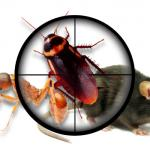 Read Article: What are the Signs of Roach's Infestation?