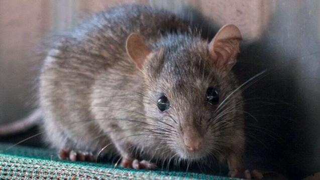 Read Article: What Happens When You Delay Controlling Rodents?
