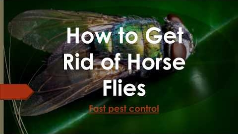 Watch Video: How to Get Rid of Horse Flies