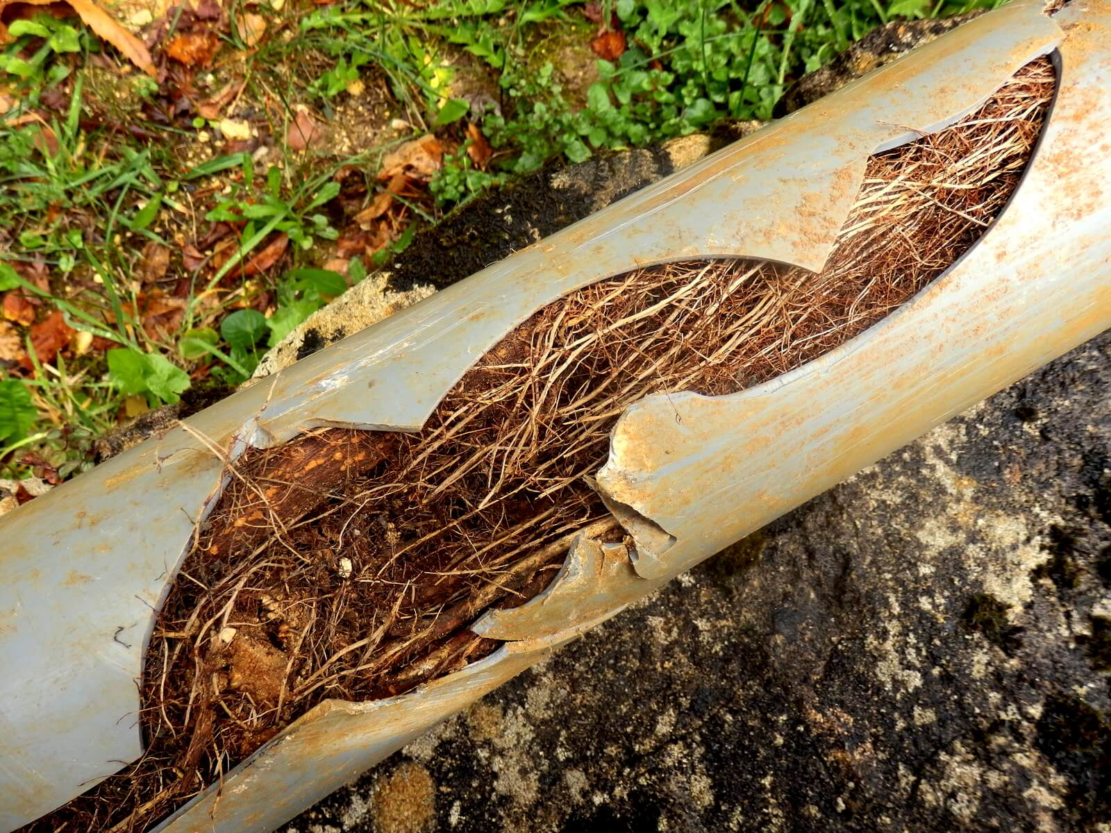 Read Article: Causes of Blocked Drains