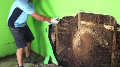 Watch Video: Think You Might Have Termites?