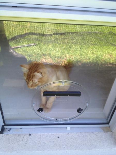 View Photo: Cat Door Como
