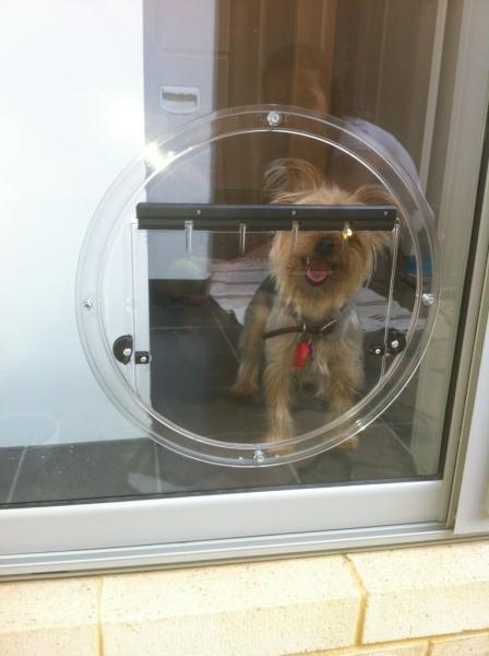 View Photo: Medium Dog Door Joondalup