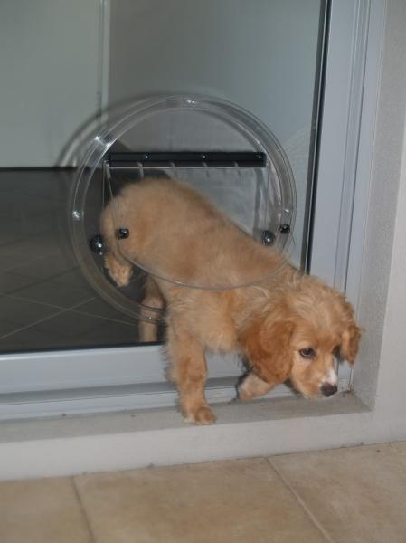 View Photo: Medium Doggie Door Scarborough
