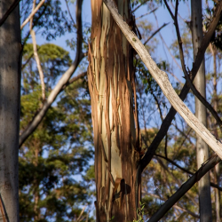 View Photo: Gum Trees