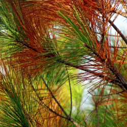 View Photo: Pine Trees