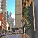 View Photo: City of Sydney Green Wall