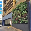 Commercial Green Wall