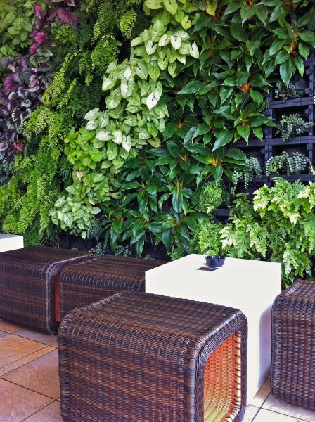View Photo: Green Wall - Courtyard