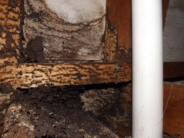 Hidden Source of Building Damage: Termites