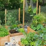 Read Article: Veggie Patches for Small Yards