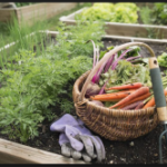 Veggie Patches: What's in Season