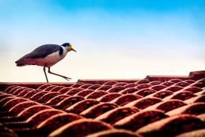Building Comparison: Roof Tiles Versus Metal Roofing