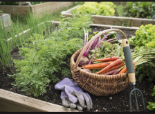 Read Article: Veggie Patches: What's in Season