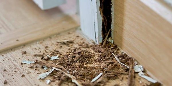 Read Article: How long does a termite treatment last?