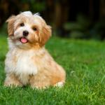 Read Article: Is Your Dog Allergic to Grass?