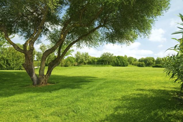 Tips for Growing Lawn in the Shade