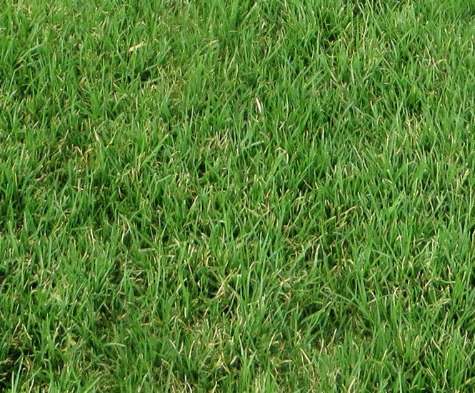 View Photo: Village Green™ Kikuyu - Premium Turf