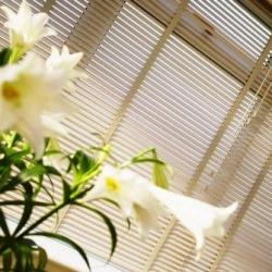 View Photo: Venetian Blinds - Basswood