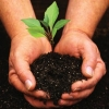 Read Article: Planting and Caring for a New Tree