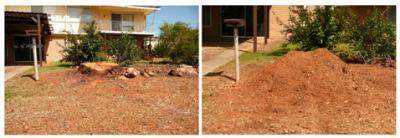 View Photo: Large Gum Tree Stump Grinding