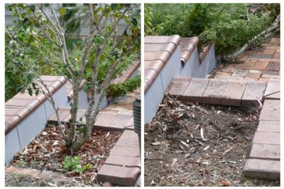 View Photo: Small Tree Removal from Garden Bed
