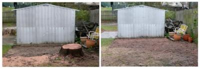 View Photo: Stump Grinding Beside a Garden Shed