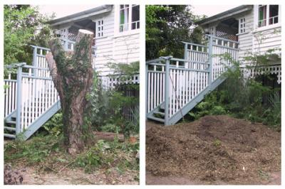 Stump Grinding Beside Exterior Stairs