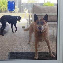 View Photo: Pet proof mesh doors