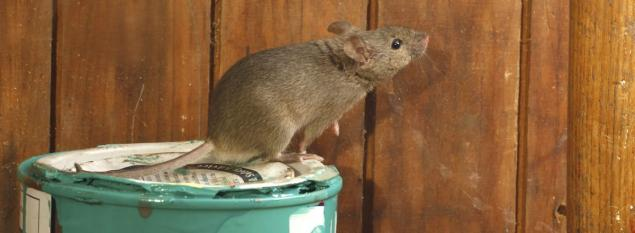Read Article: How Can You Identify Mice Infestation at Home?