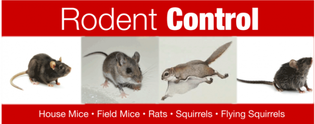 Read Article: Protect your Home from Rodents this Winter