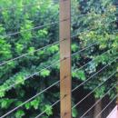 View Photo: Timber, steel and wire balustrade