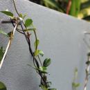 View Photo: Wire Trellis For Gardens