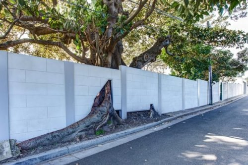 Read Article: Tree's a Crowd - A Residential Project at Rose Bay, NSW