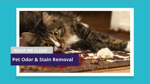 Watch Video: No1 Carpet Cleaning Melbourne   Brighton