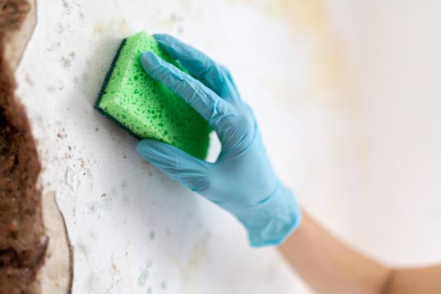 Read Article: 4 Things You Need To Know About Mould In Your Home