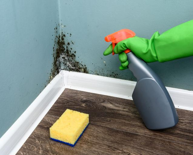 Different Types of Mould and Mould Prevention Tips