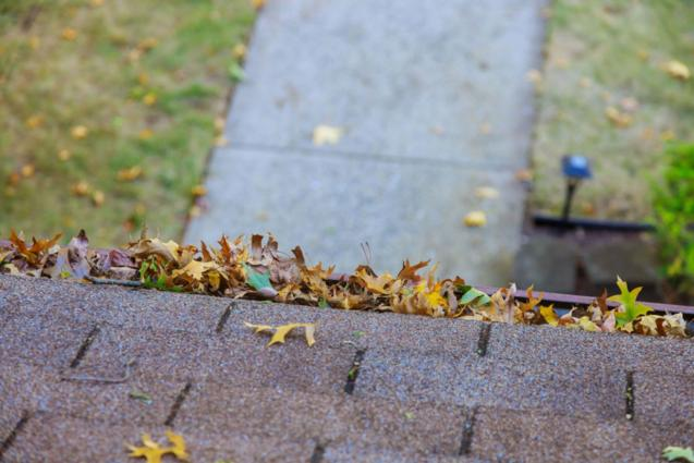 Read Article: Why It's Important To Keep Your Roof Clean