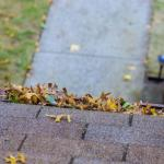 Why It's Important To Keep Your Roof Clean