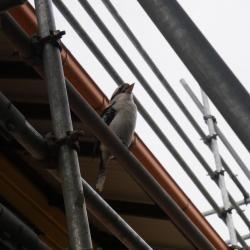 View Photo: Roofing Balmoral Brisbane – Ozroofworks