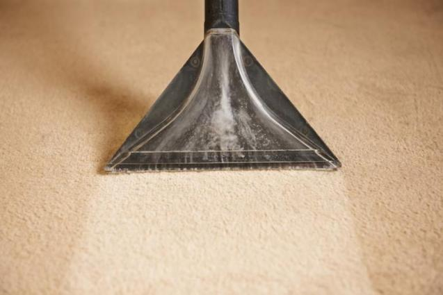 View Photo: Professional Carpet Cleaning