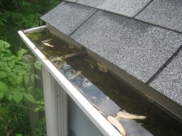 Read Article: What You Need To Know Before You Hire A Gutter Cleaning Service