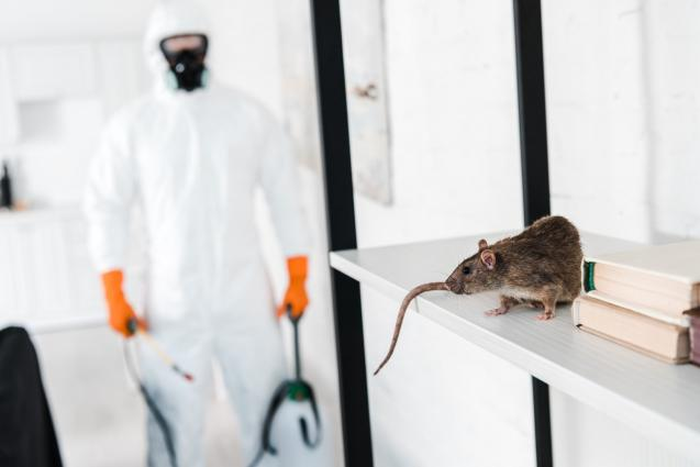 Read Article: 4 Key Steps to Prevent Rodents Inside the Home