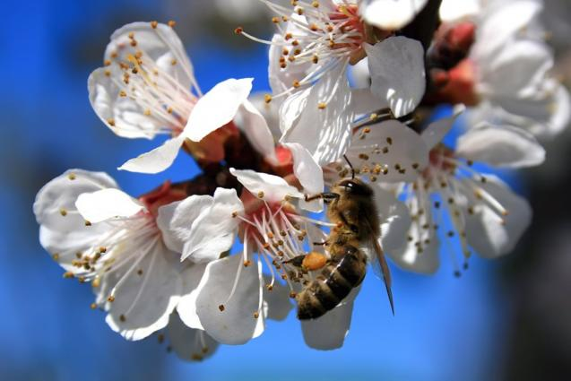 Read Article: How To Identify And Remove A European Wasp Nest Or Bee Hive