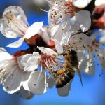 How To Identify And Remove A European Wasp Nest Or Bee Hive