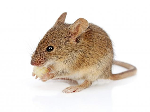 Read Article: How To Protect Your Family Against Diseases Spread By Rodents