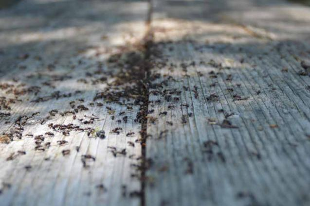 Read Article: Understanding The Life Cycles Of Common Household Pests