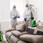 Why You Need A Professional Termite Control Company