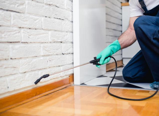 Read Article: The 10 Best Eco Friendly Carpet Cleaning Methods