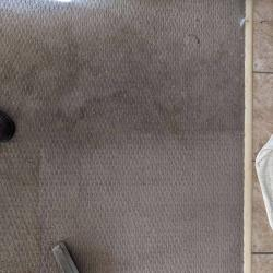 View Photo: Heavily Soiled Carpets in Rental House